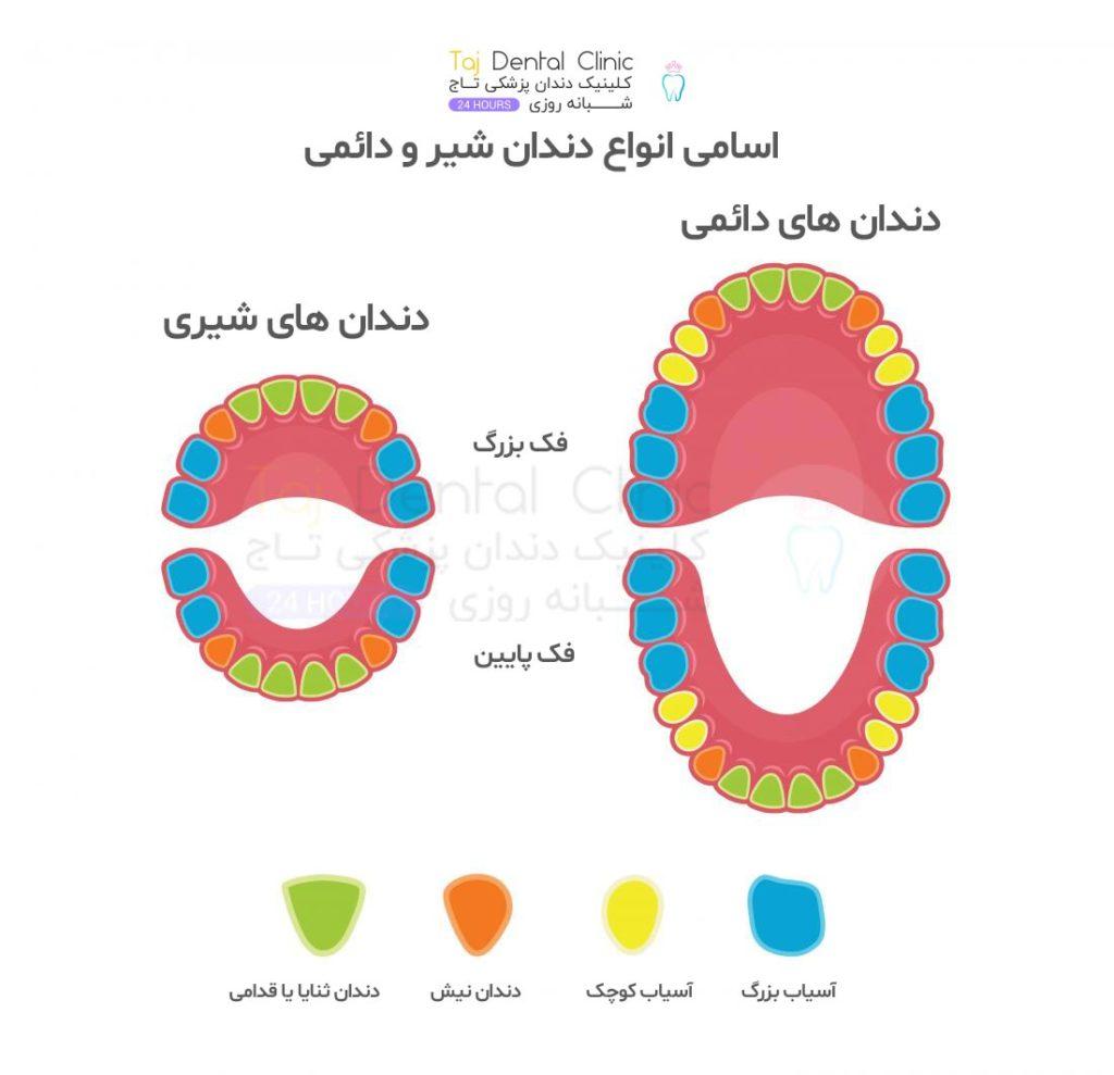 نام انواع دندان شیری و دائمی در کودکان و بزرگسالان